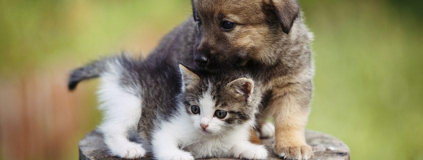 Behandlung von Welpen und Jungtieren durch Fachtierärztin für Kleintiere